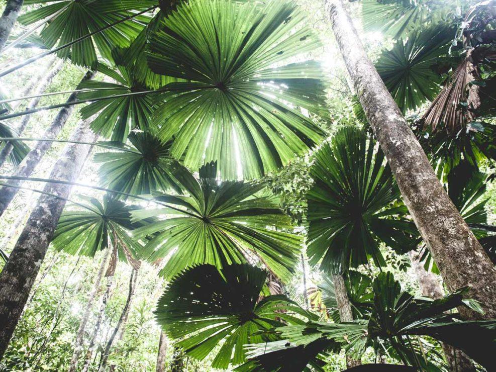 foret tropicale australienne