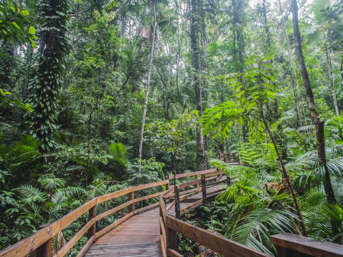 Rainbow forest en australie