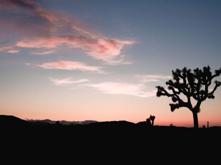 sunset joshua tree