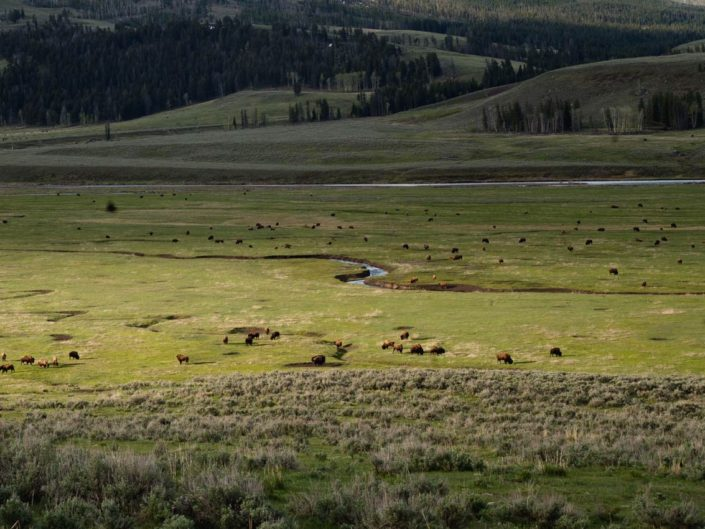 yellowstone lamar valley