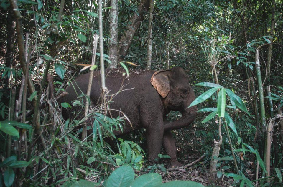 Rencontrer des éléphants au Cambodge | Mondulkiri project