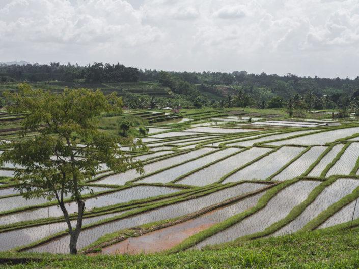 jatiluwih rizières