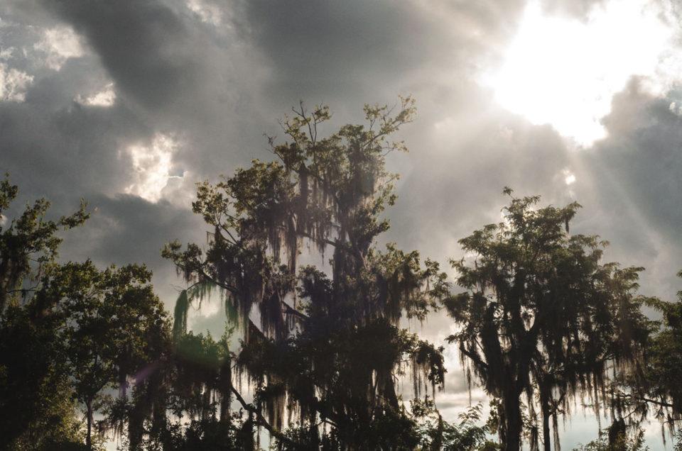 bayou louisiane