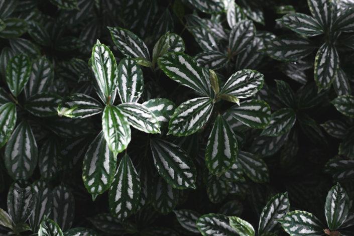 se mettre au vert edimbourg