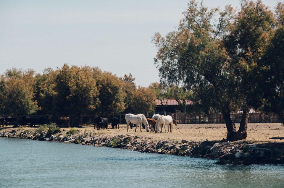 Week end en Camargue | Pèlerinage,mas isolé et douceur de vivre