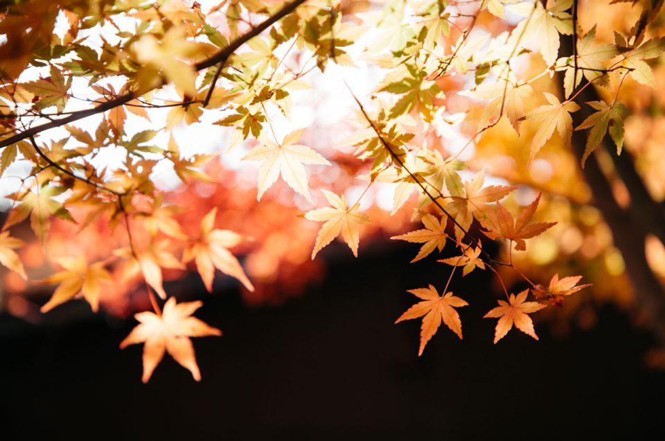 L'automne au Japon, 4 idées de voyages à contre-courant