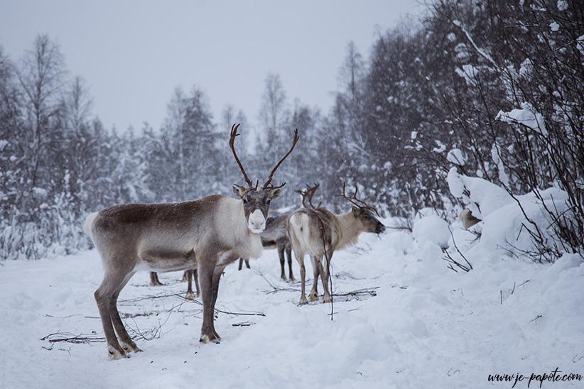 12 villes à visiter en hiver - Entre paysages de Noel et soleil d'été