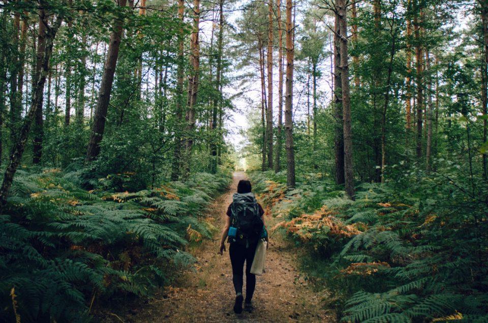 Randonnée dans la forêt de Rambouillet à deux pas de Paris
